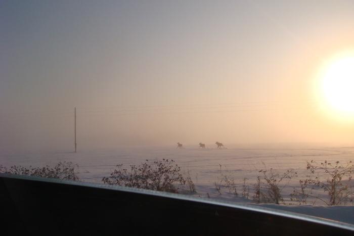 08.01.2010 г. за окном -45, лоси вдоль дороги бегают.