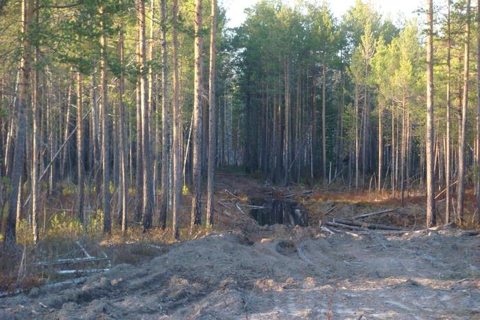 после лесозаготовок, как после войны в тайге....