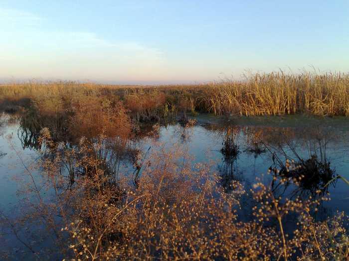 наши болота