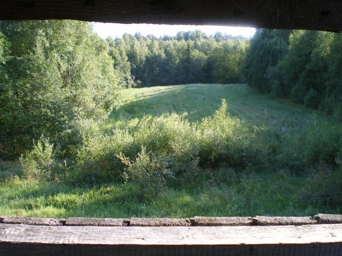 вот такая красота (овес в лесу......:) )
