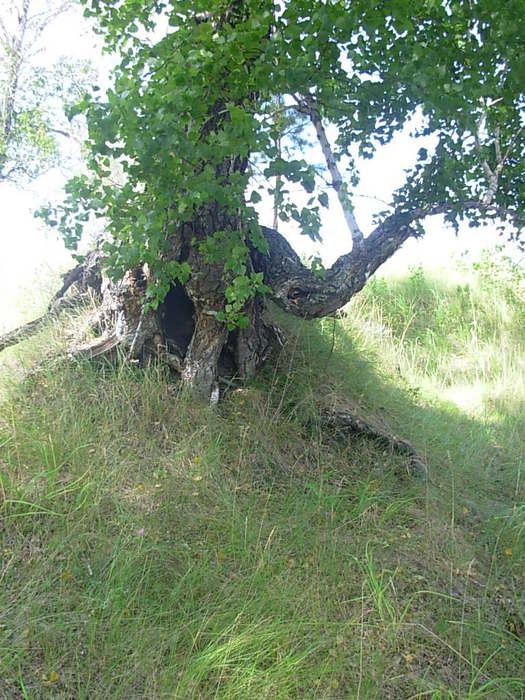 """""""Страшное дерево"""""""
