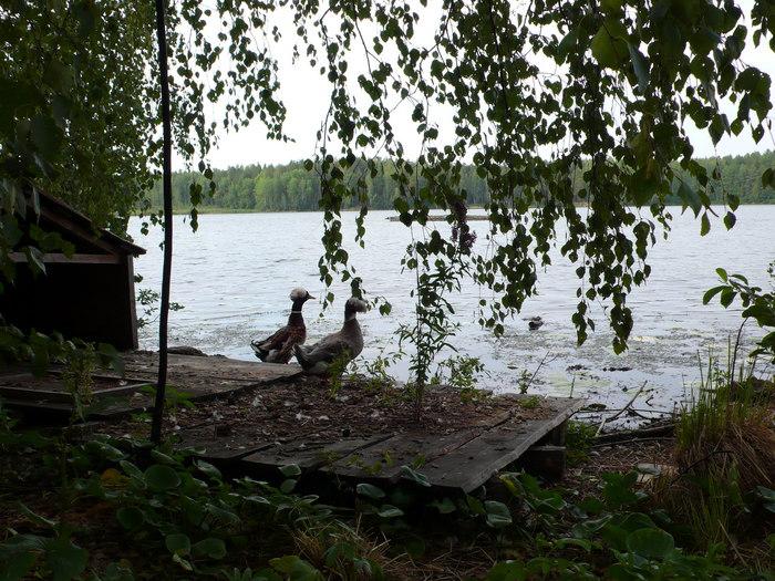 """А это озеро -""""платник"""" в уральских горах"""