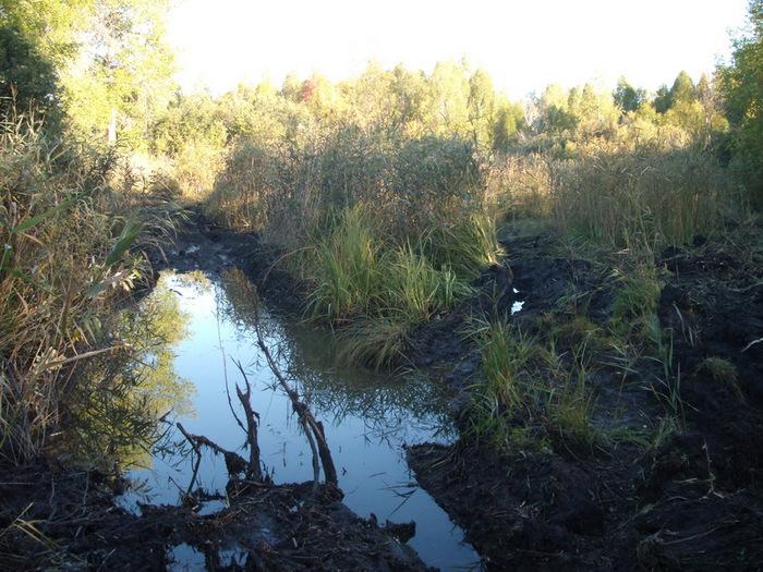 дорога на клюквенное болото