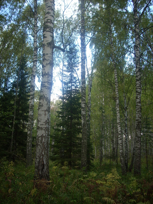 Осень в Томском лесу.
