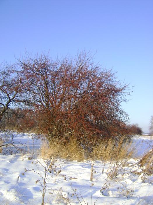 То что не съели осенью, пригодится зимой!