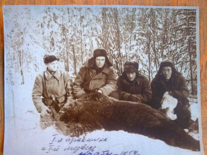 Первый медведь в ноябре 1959
