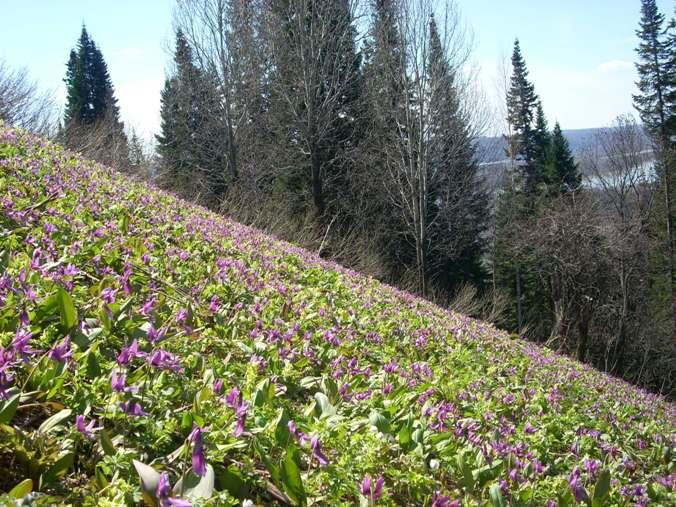 красоты  цветущих склонов!