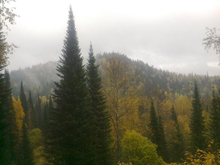Осеняя тайга.