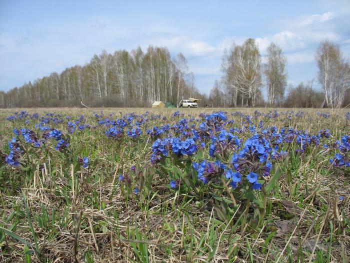 весна 2007 года
