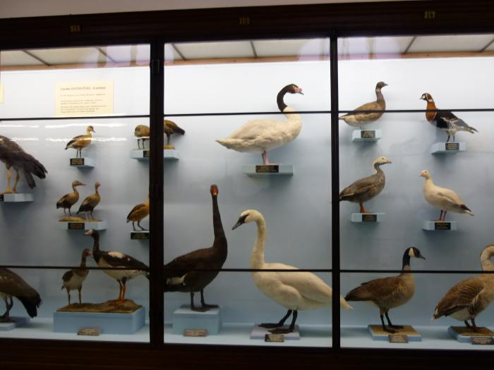 Музей природы.