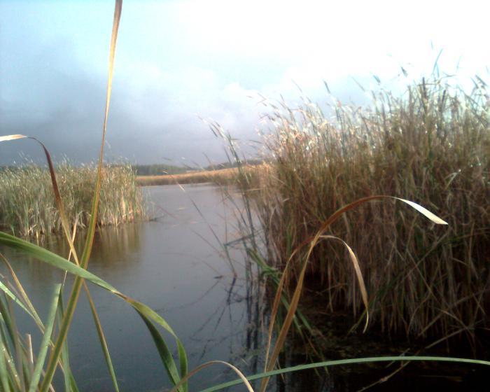 Утичи - хорошое болото!