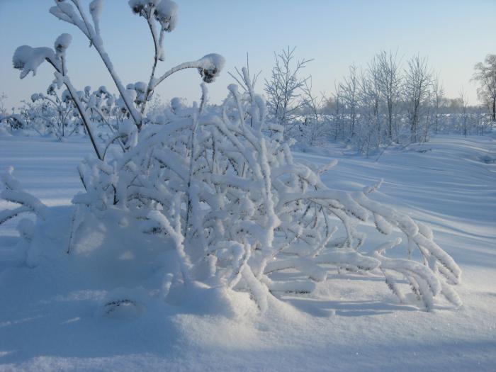 Зимние утро  на Природе.