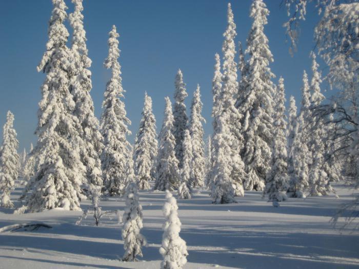 зима в эвенкии.