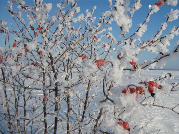 зимний уражай