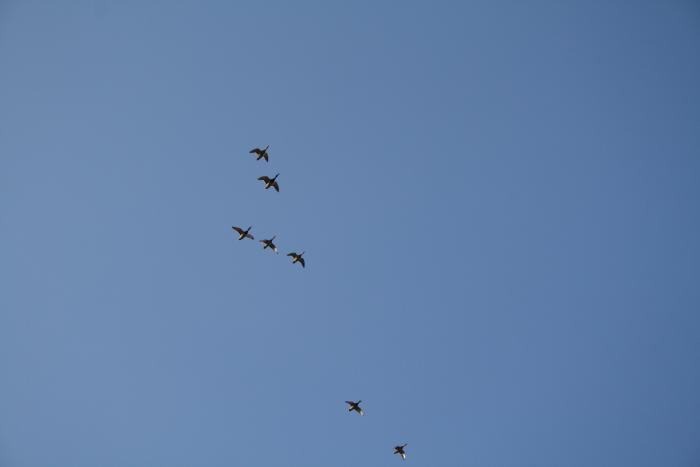 Летят утки....
