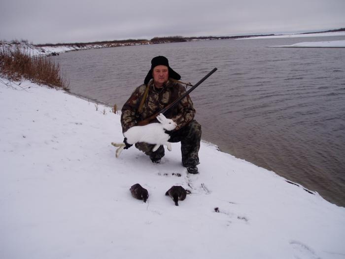 Белый зайчик и две уточки черень.Ноябрь месяц.