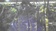 Бобриная плотина 2