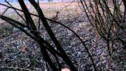 На охоте с подсадной уткой
