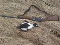 Вот и я закрыл сезон охоты Весна-2011г