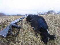 Неплохие  места  за  Зырянкой...,  тетерева и зайцы  остались...,  жаль - не много....