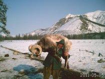 БАРАН якутский снежный чубуку