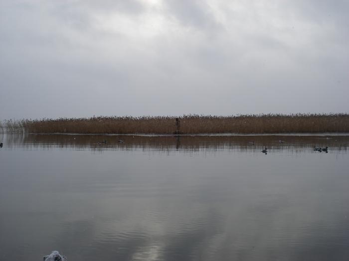 Озеро замерзает, а её всё нет.......
