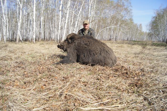 Охота на Кабана в Сладково