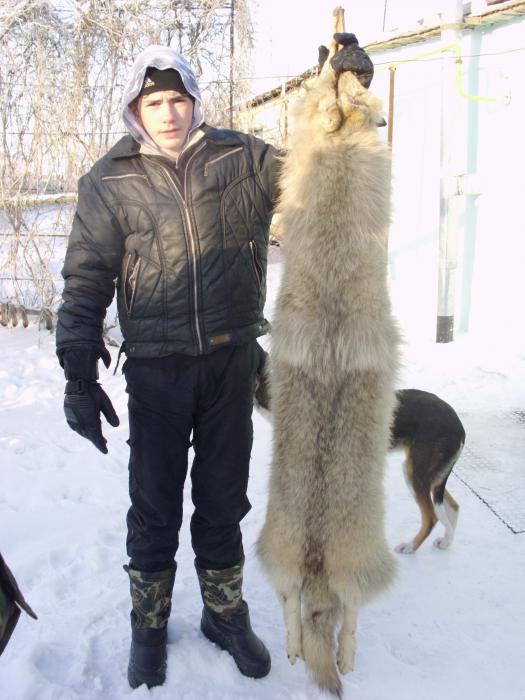 волчья шкура