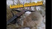 Охота на зайца-русака в Финляндии