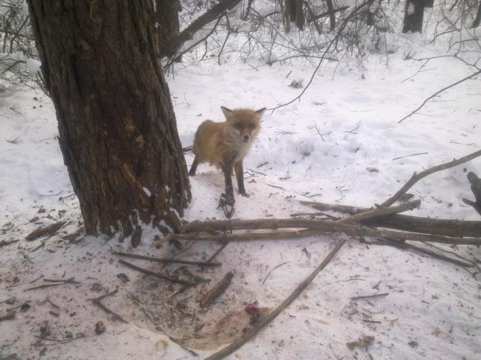 Попалась в нолевку под полуметровым слоем снега