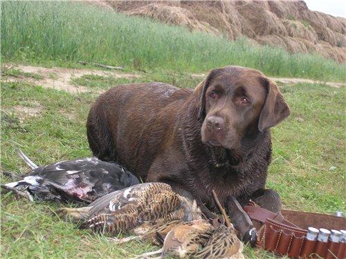 После осенней охоты!