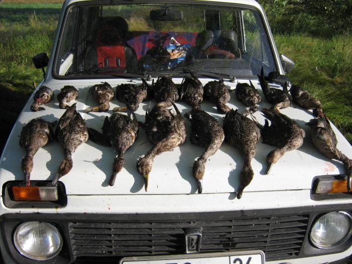Трофеи на открытие охоты,за утро