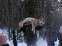 Добыта волчица Февраль 2012г.