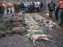 Загонная охота.Ноябрь 2011.