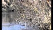 Разведка утиных мест перед весенней охотой 2012