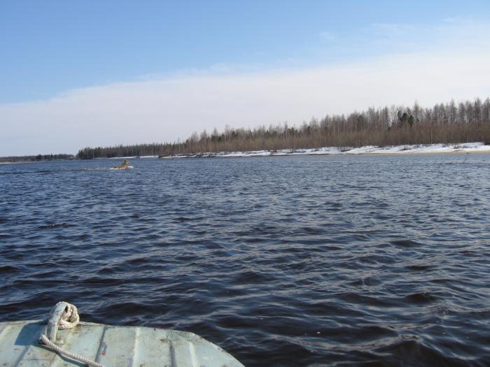 весенний заплыв