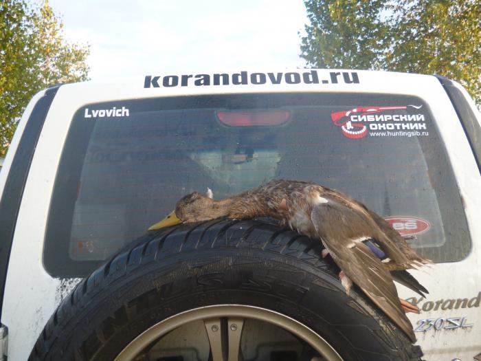 Первая добыча сезона 2012-2013 г.г.