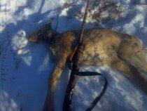 В первый раз на охоте