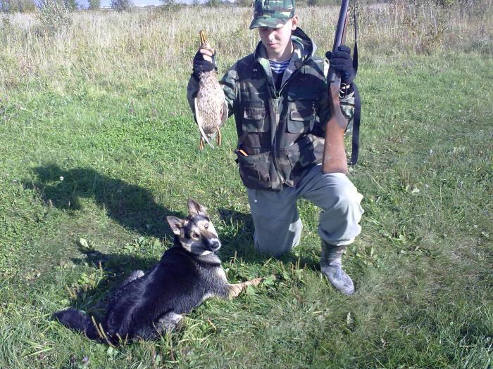 охота на уток осень 2011