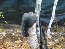 02 10 2012  Глухарёк