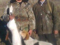 На охоте в Баевском районе добыт беляк из под гончей