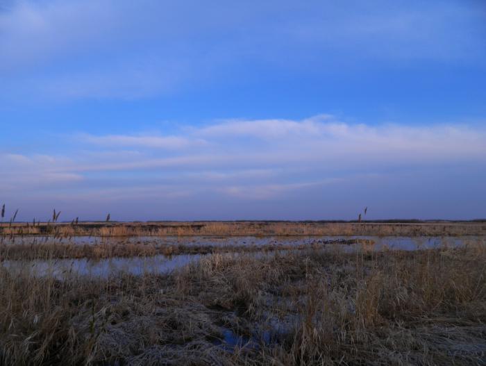 болото Карасукский район
