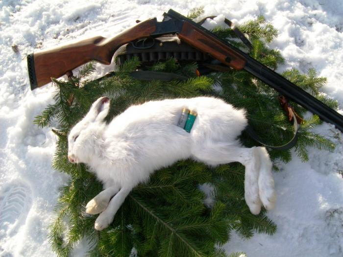 Открылся по зайцу