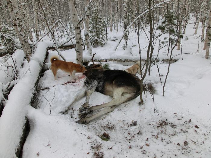 Удача охотника