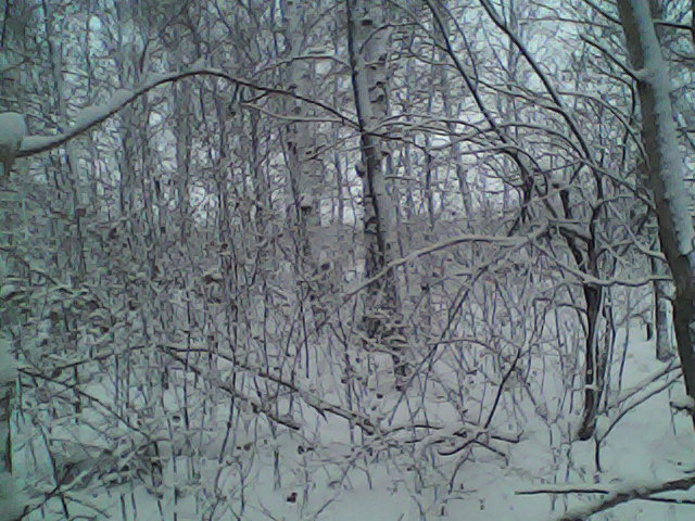 Зимний лес Сибири.