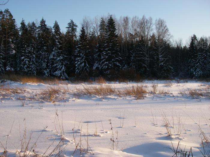 Река встала,а весной утки ,тут жуть))))