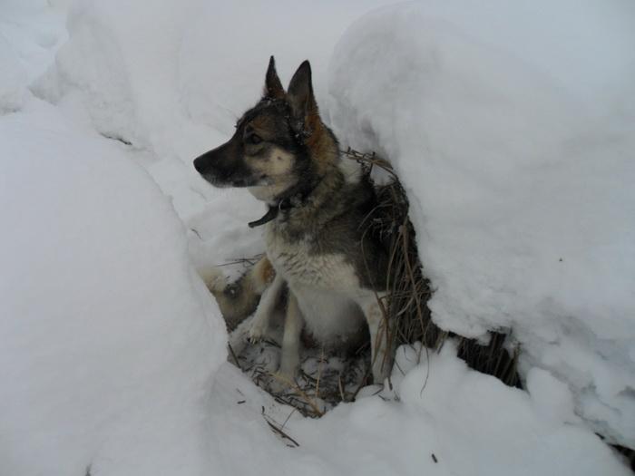 Устала... Выкопала лежку под кочкой)))