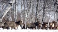 Охота в Сибири
