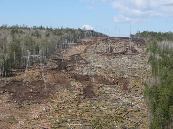 Buga: Наверно поэтому лес повален;)))