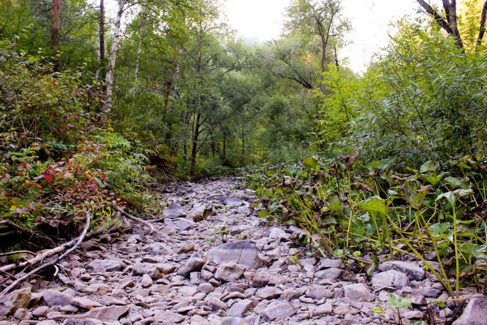 Засушливое лето, речка пересохла